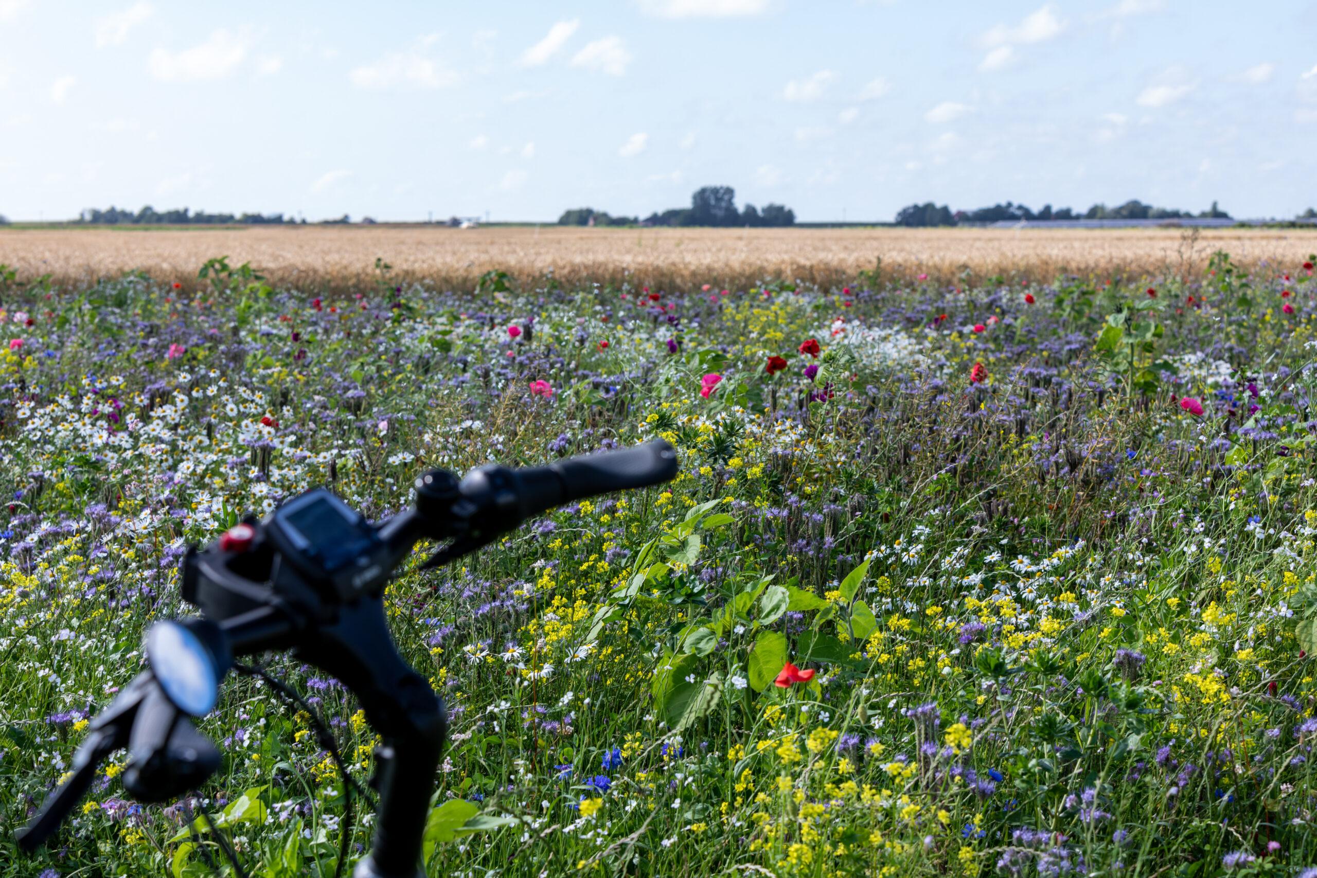 Blumenwiese mit Fahrradlenker